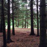 Crystal Roots Retreats